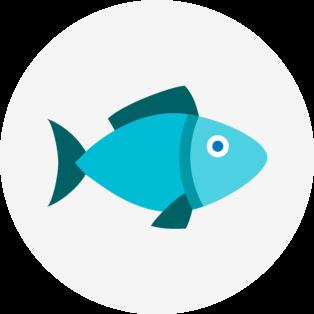 fish-delicate