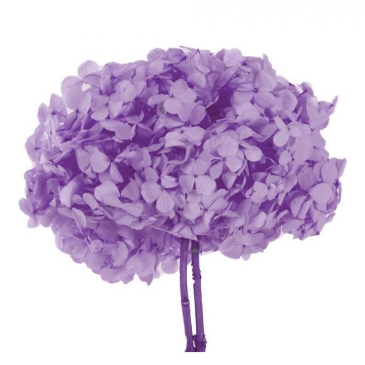 Bouquet Ortensie Lilla