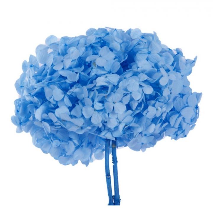 Bouquet Ortensie Azzurre